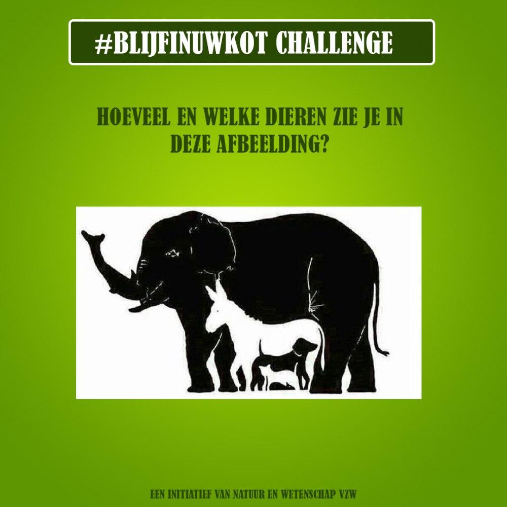 challenge 19 april